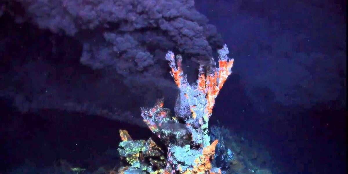 Белки и биохимическая экология микроорганизмов из гидротермальных источников Камчатки